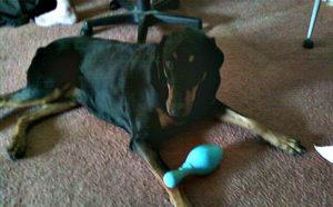 JW Bowling Pin Dog Toy