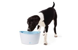 1. Dogit Design Fresh and Clear Dog Drinking Fountain