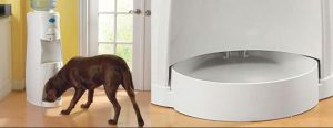 21.Refillable dog water bowl