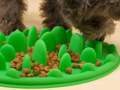 37. Best Slow Feed Dog Bowl