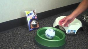 Bowls To Help Dogs Eat Slower