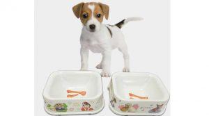 Slow Drink Dog Bowl