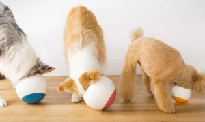 dog bowls to slow down eating