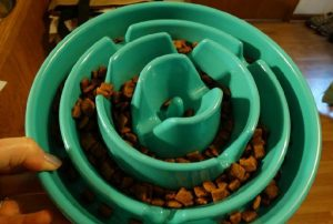 dog food bowls that slow down eating
