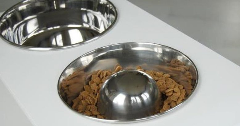 metal slow feeder dog bowl