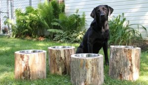 raised feeding bowls for large dogs