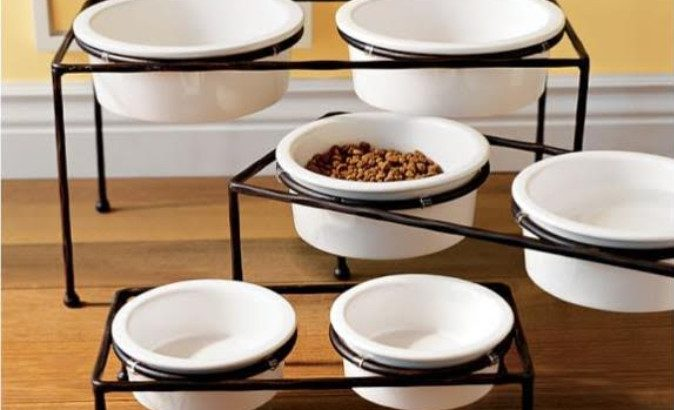 raised food bowls for dogs