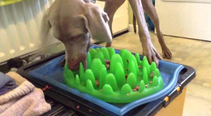 slow eater dog bowl