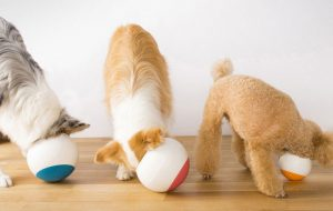 Best Dog Bowls That Slow Down Eating
