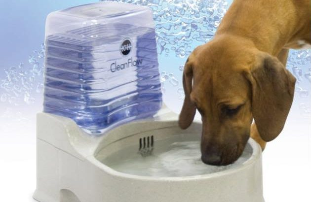 Filtered Water Bowl For Dogs