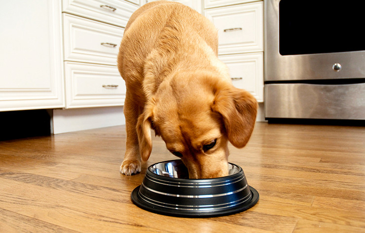 How to Choose a Slow Feed Bowl For Dogs