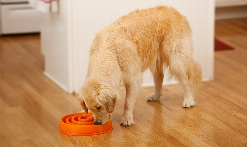 Most Wanted Slow Feeding Dog Bowls