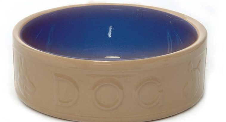You Will Have No Reasons to Ignore These Ceramic Dog Food Bowls