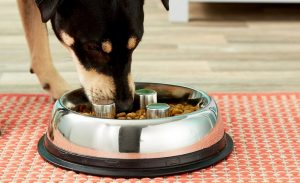 Dog Bowls For Fast Eaters List