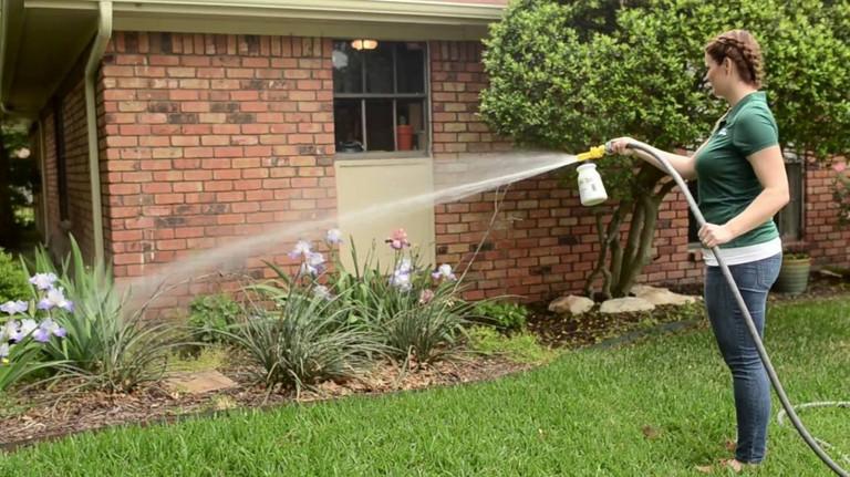 fleas in yard treatment
