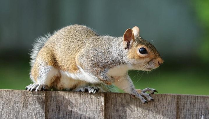 how to get rid of squirrels in the yard