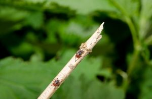 how to get rid of ticks in yard
