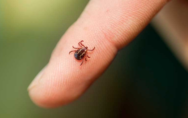 how to prevent ticks in yard