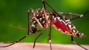 mosquito treatment for yards