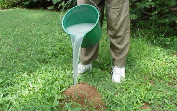 Means of the Best Ant Killer for Yard