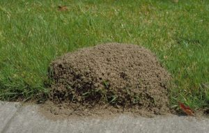 ant killer for yard
