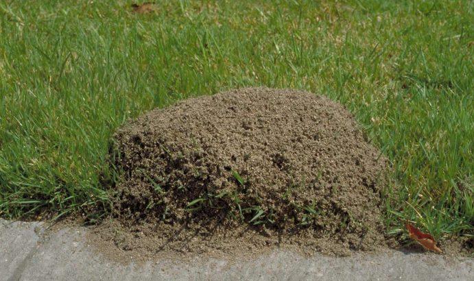 ant killer for yard