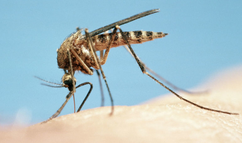 best mosquito spray for yard