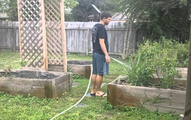 how to get rid of bugs in yard