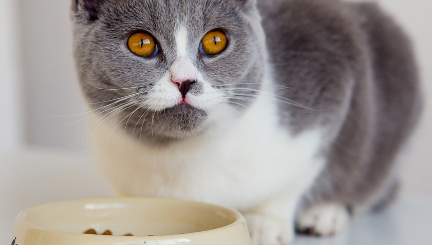 The Ways to Pick Cat Food for Triaditis