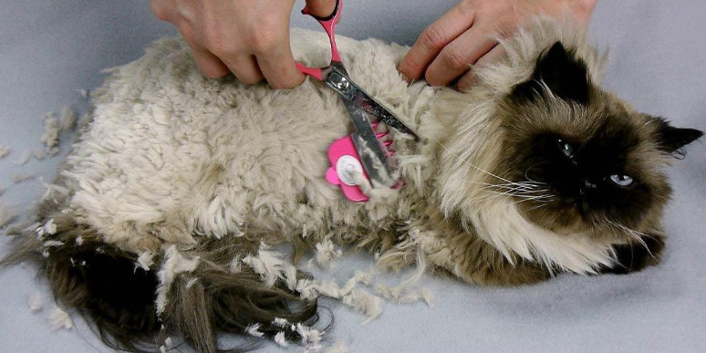 Get to Know Closer about Scaredy Cat Grooming Scissors