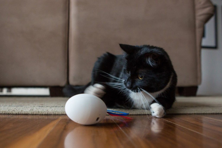 Shru Cat Toy with High Durability, Interesting Features, and Top Material