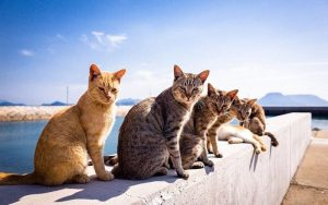 Simple and Easy Process for Deworming Feral Cats in Your Community