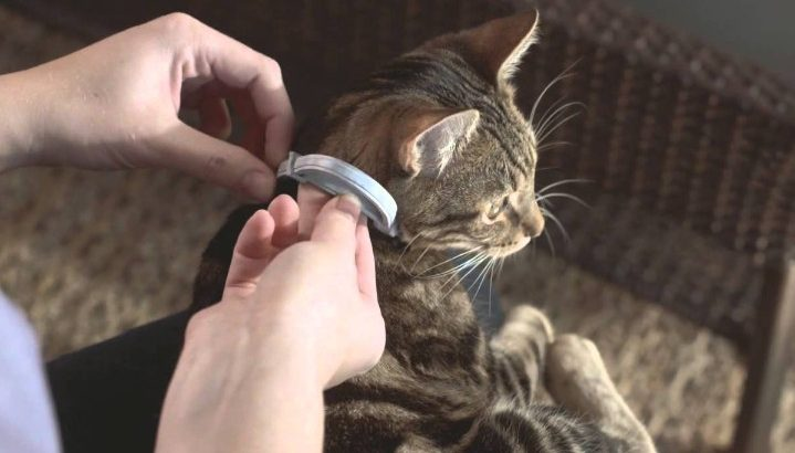 Choosing Seresto Cat Collar to Repel and Kill Fleas