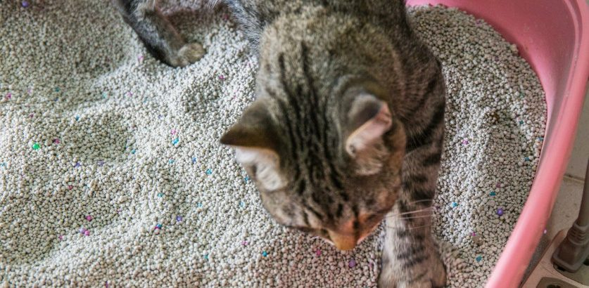 The Ultimate Guide to Find the Best Cat Litter for Odor Control