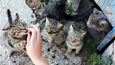 All You Need to Know about Taming Feral Cats