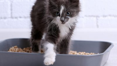 Best Cat Litter for Multiple Cats and Worth to Try