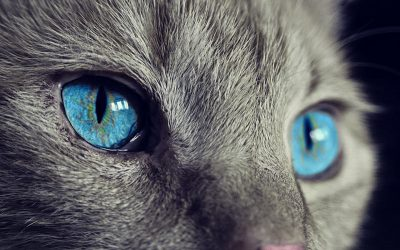 Kitten Eye Infection Home Remedy You Can Do on Your Own