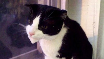 Know the Causes and What to Do if Cat Vomiting Foam