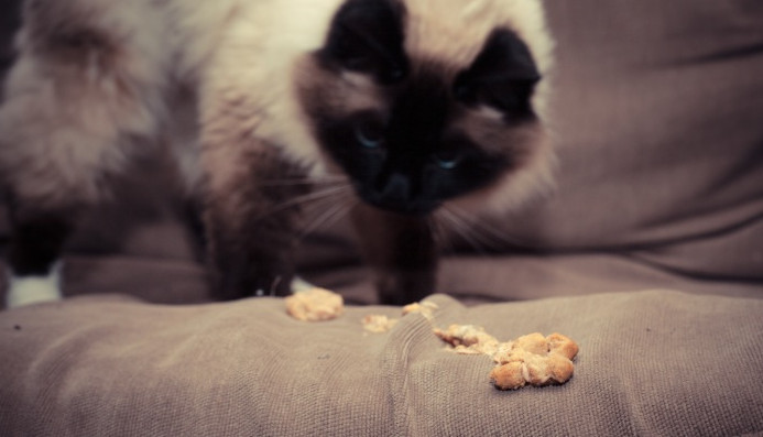 Knowing Some of the Common Causes of Cat Vomiting Food