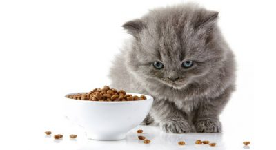 Low Carb Dry Cat Food That Highly Recommended