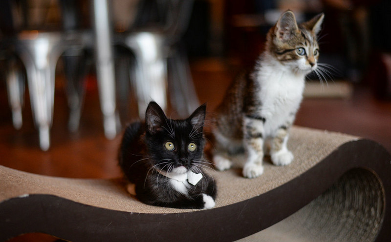 Some Good Alternatives of Cat Treats Pounce for Your Lovely Cats