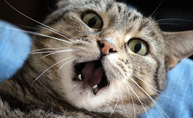 Some Solutions for Cat Teething to Reduce the Pain