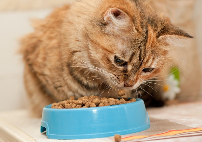 Some Useful Tips to Get Full Benefits of Science Diet Cat Food Coupons