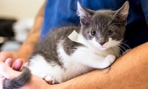The Cost of Cat Neutering Every Pet Owner Should Know
