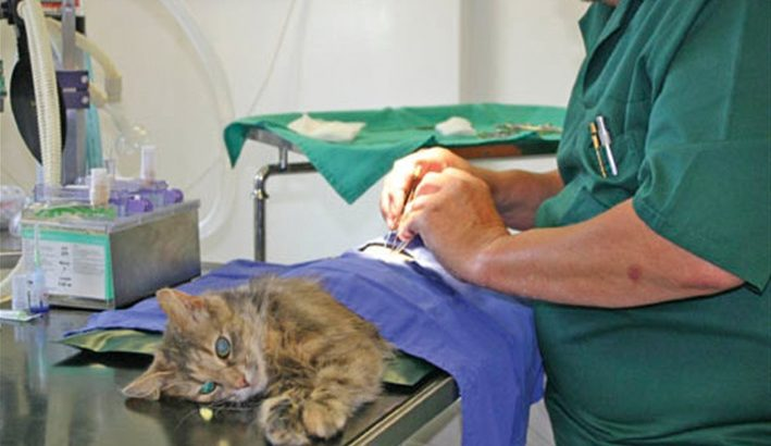 What to Expect from Cheap Cat Neutering