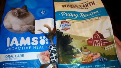 All You Need to Know about IAMS Cat Food Coupons