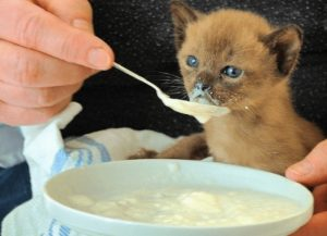 Liquid Cat Food and You Should Know Them before Feeding
