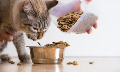 Rachael Ray Cat Food Review to Consider