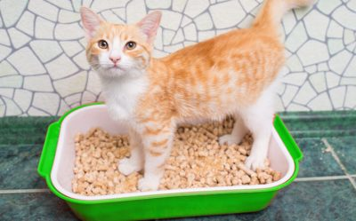 Some References of the Best Hypoallergenic Cat Litter