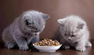 What to Look Into Nulo Cat Food Reviews